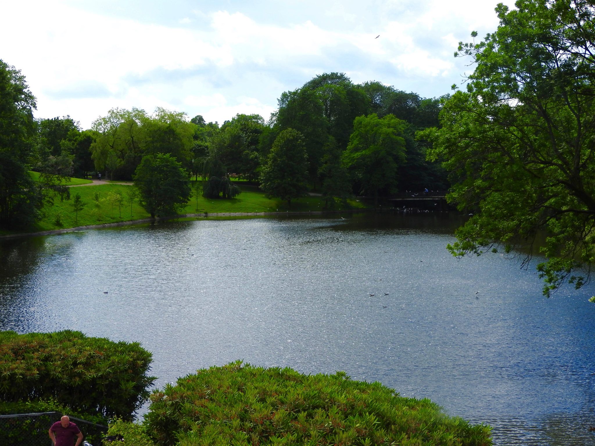 Pond surrounded by trees and other greenery Oslo Norway