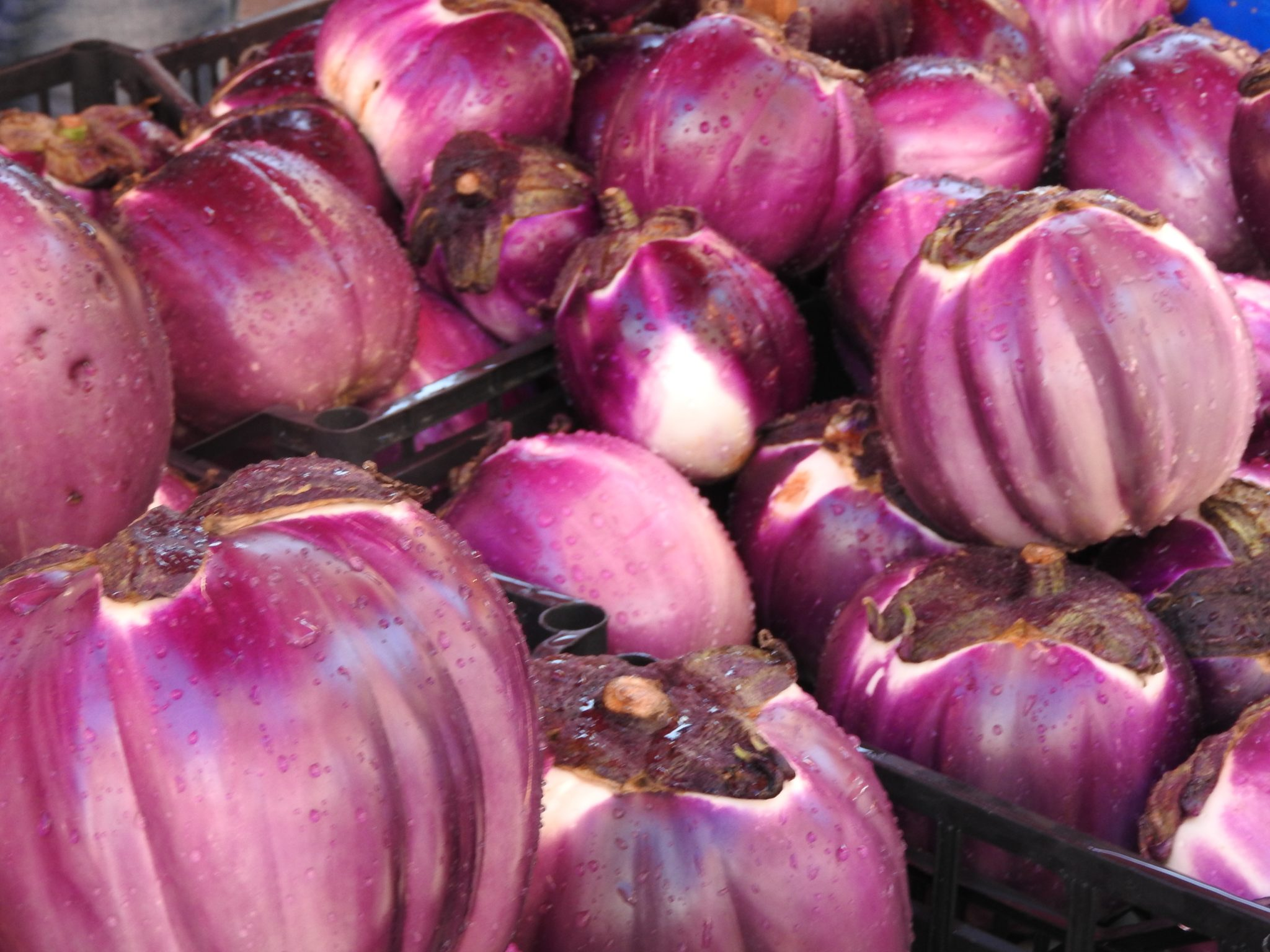 close up of eggplants